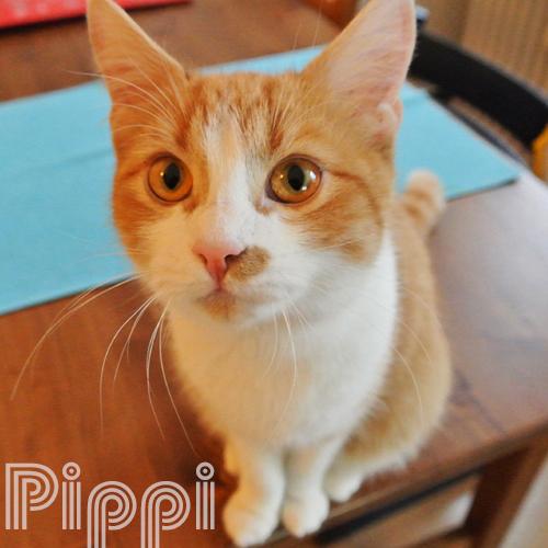 Katzendame Pippi